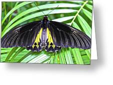 The Largest Butterfly In The World Greeting Card