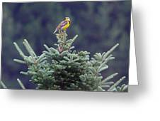 The Lark Greeting Card