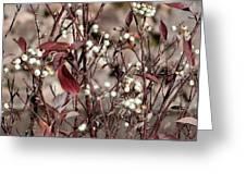 The Last Berries Greeting Card