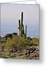 The Last Cactus Greeting Card