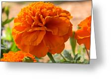 The Last Marigold Greeting Card
