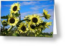 The Last Of Summer Greeting Card