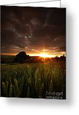 The Last Rays Of The Sun Greeting Card