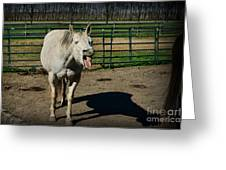 The Laughing Horse Greeting Card