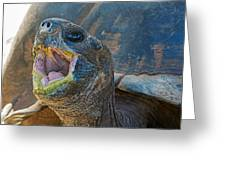 The Laughing Tortoise Greeting Card