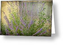 The Lavender Outside Her Window Greeting Card