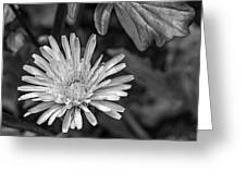 The Lawn King Bw Greeting Card