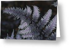 The Leaf Of A Japanese Painted Fern Greeting Card