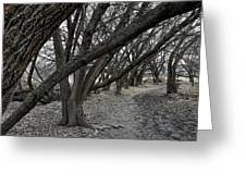 The Leaning Boughs Greeting Card