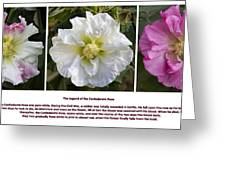The Legend Of The Confederate Rose Greeting Card