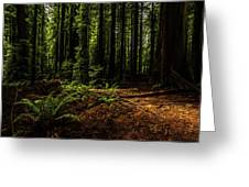 The Light In The Forest No. 2 Greeting Card