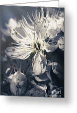 The Light Of Spring Petals Greeting Card