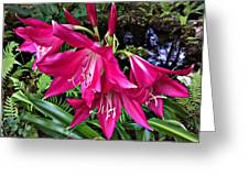 The Lilies Of Summer Greeting Card