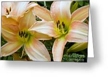 The Lillies Have It Greeting Card