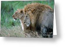 The Lion And His Lioness Greeting Card