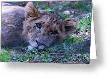 The Lion Cub Greeting Card