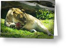 The Lion Eats Today Greeting Card