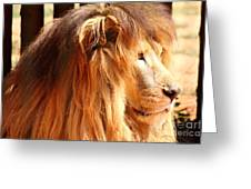 The Lion King's New Hairdont Greeting Card