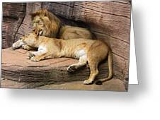 The Lions Greeting Card
