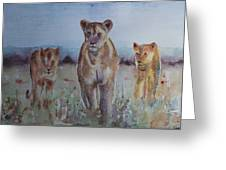 The Lions Of Africa 1 Greeting Card