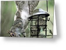 The Little Acrobat Greeting Card