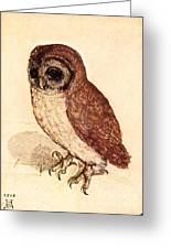 The Little Owl Greeting Card by Pg Reproductions