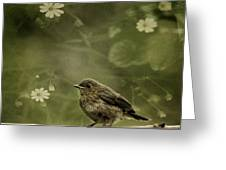 The Little Robin Greeting Card