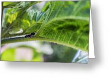 The Lone Ant Greeting Card