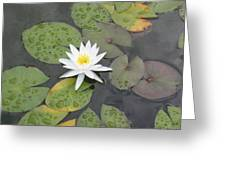 The Lone Bloom Greeting Card by Jodi Marze Kass