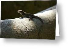 The Lone Lizard Greeting Card