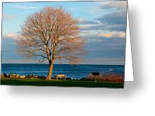 The Lone Maple Tree Greeting Card