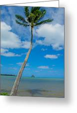 The Lone Palm Greeting Card