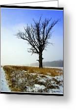 The Lone Tree Greeting Card by Trina Prenzi