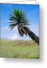 The Lone Yucca Greeting Card