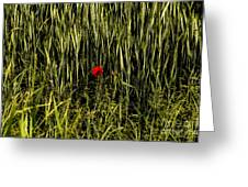 The Loneliness Of A Poppy Greeting Card