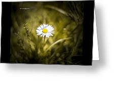 The Lonely Daisy Greeting Card