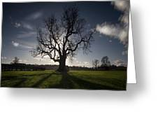 The Lonely Tree Greeting Card by Angel  Tarantella