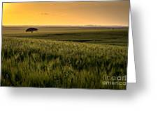 The Lonely Tree, Israel Landscape Greeting Card