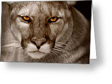 The Look - Florida Panther Greeting Card
