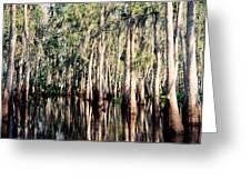 The Louisiana Bayou Greeting Card