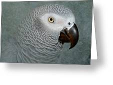 The Love Of A Gray Greeting Card