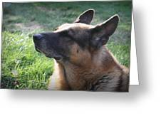 The Love Of An Old Dog Greeting Card