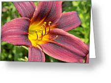 The Love Of Lilies Greeting Card