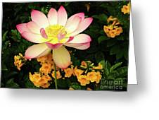 The Lovely Lotus Greeting Card