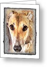 The Loving Eyes Of A Greyhound Greeting Card