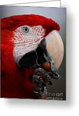 The Macaw Greeting Card