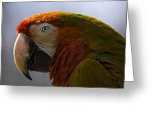 The Macaw Portrait Greeting Card