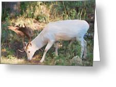 The Magical Deer 3 Greeting Card