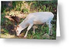 The Magical Deer Greeting Card