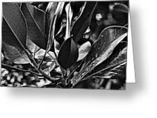 The Magnolia Greeting Card